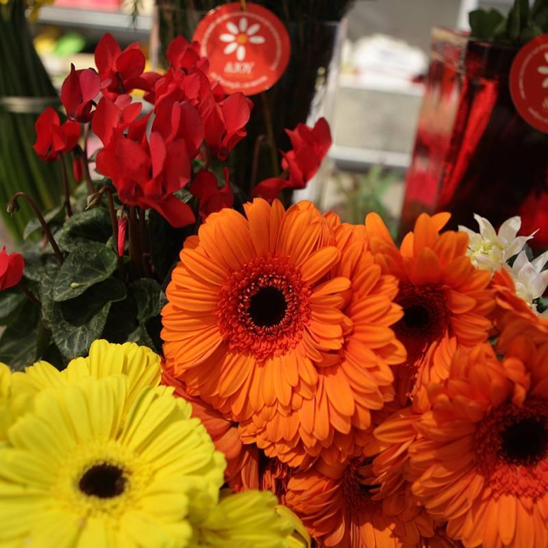 פרחים רבותי פרחים – סטודיו אנדג'וי