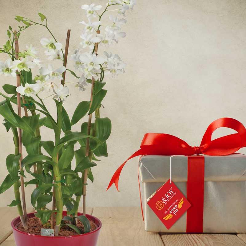 מתנות סוף שנה עם ערך חברתי