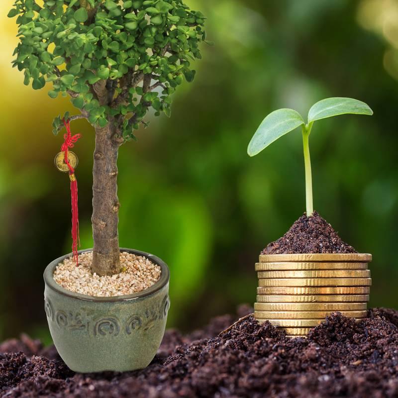 מהו עץ הכסף ומה הוא מסמל