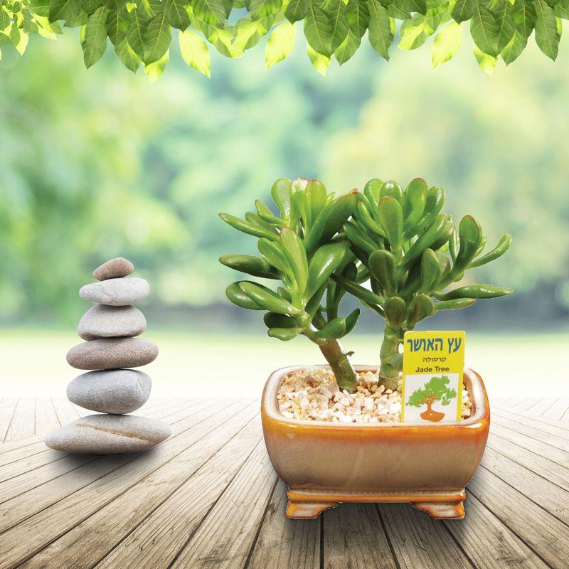 מכירים את עץ האושר?
