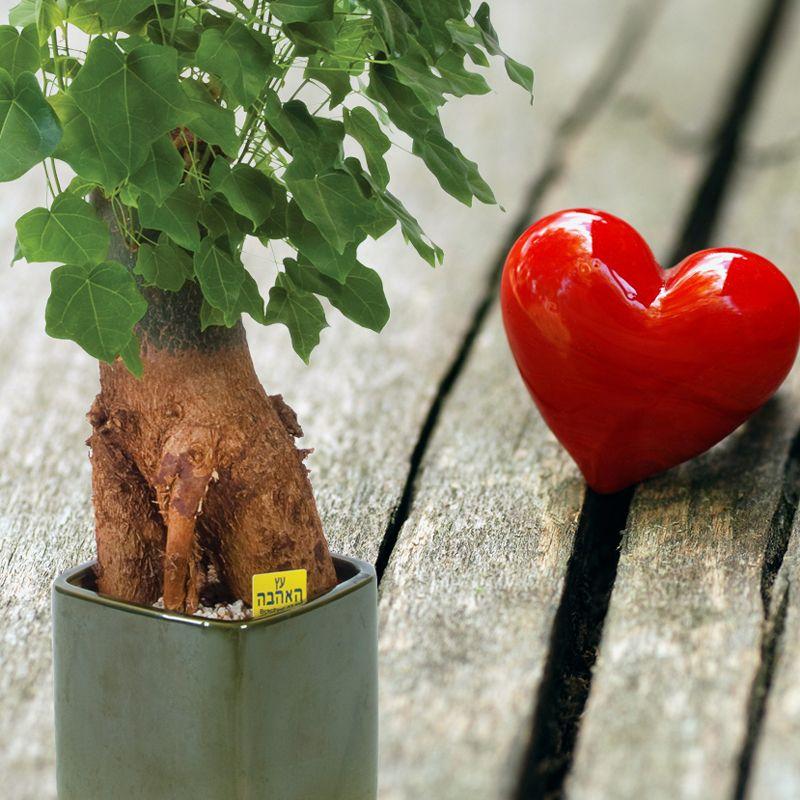 עץ אהבה מתנה ייחודית עם מסר אוהב