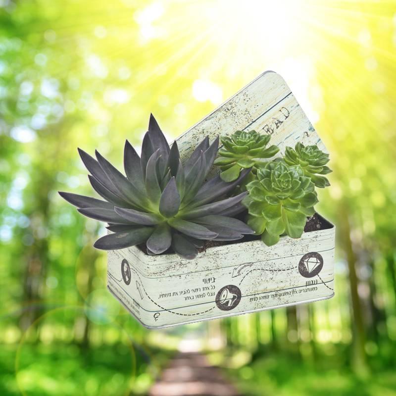 צמחים מעוצבים מתנה מקורית לבית