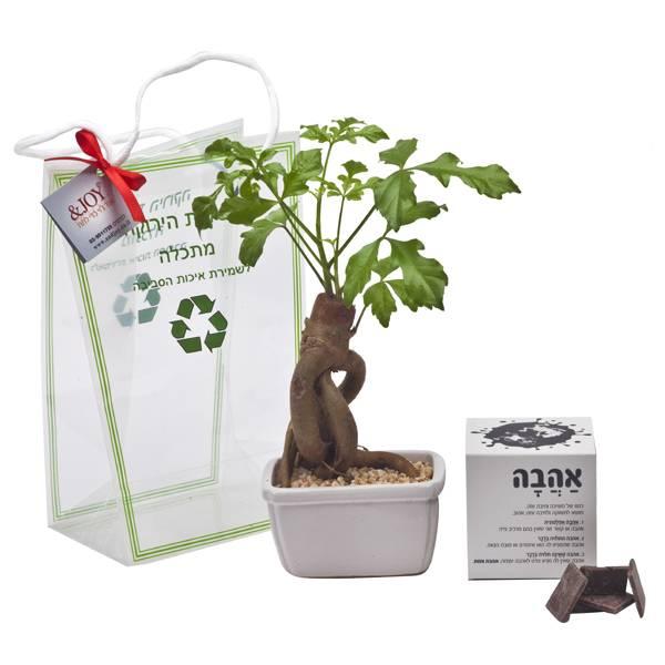 התמונה הראשית של בונסאי עץ האהבה בינוני עם מארז אהבה שוקולד