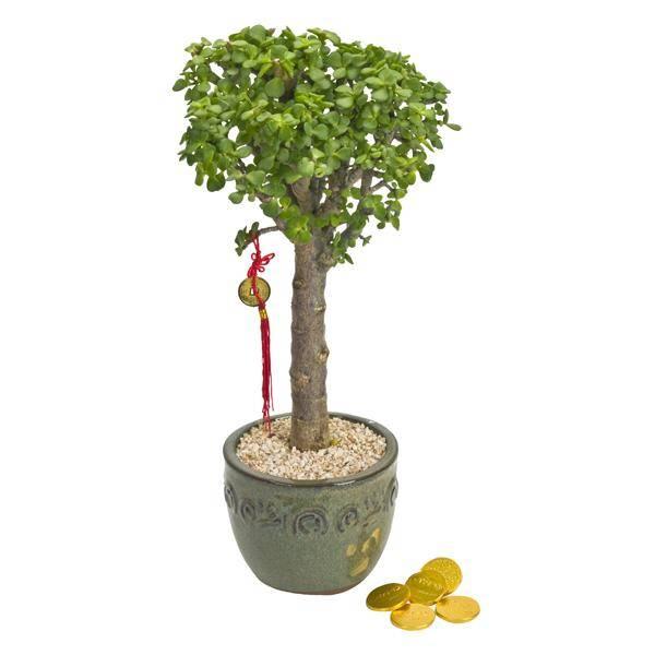 התמונה הראשית של עץ כסף +מטבעות