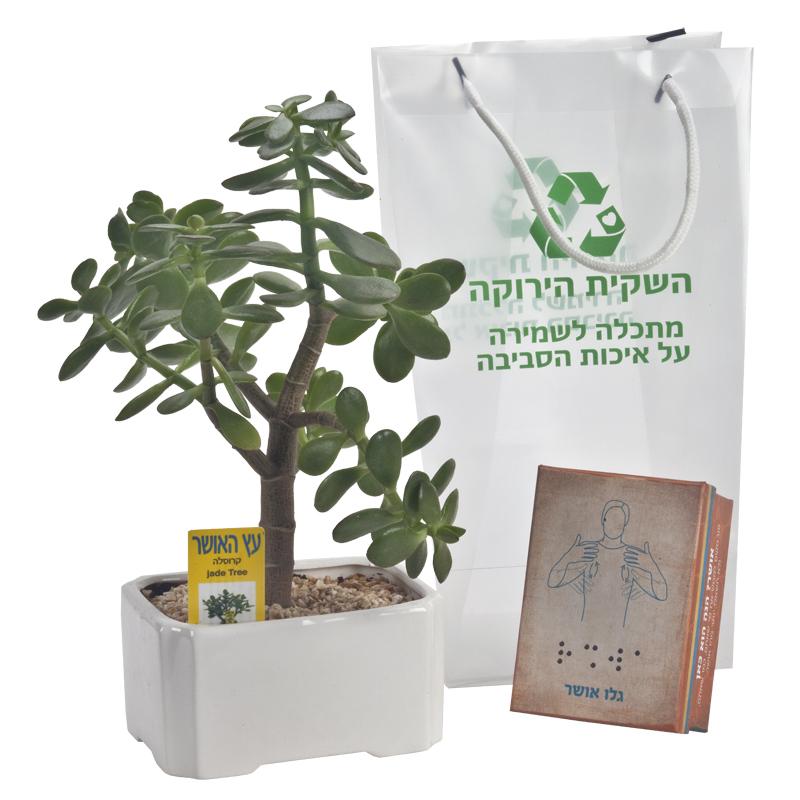 התמונה הראשית של עץ אושר בינוני במארז HAPPINESS ושוקולד