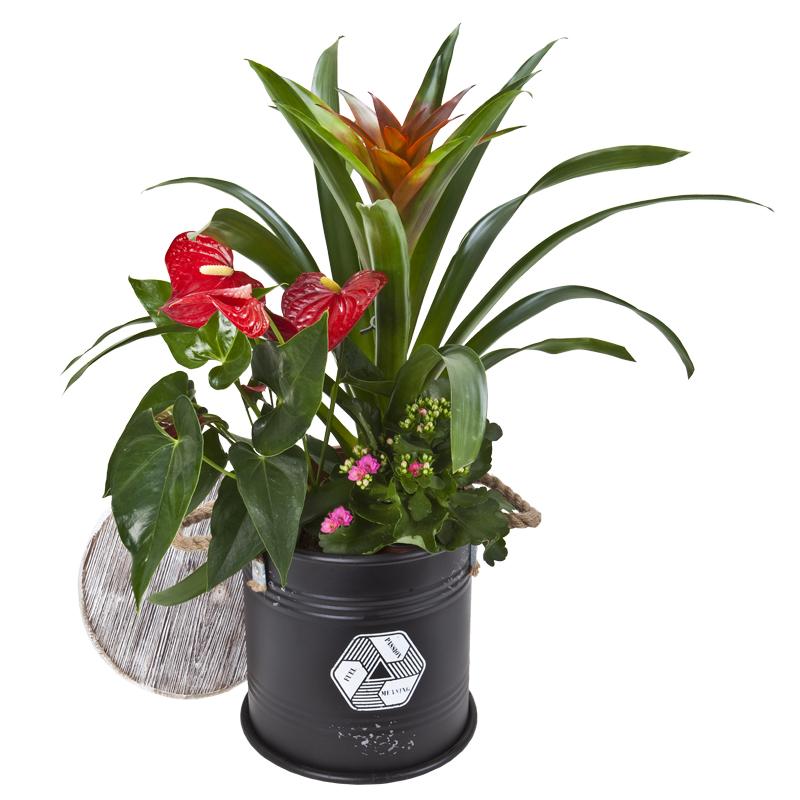 התמונה הראשית של קוקטייל צמחים בחבית של משמעות