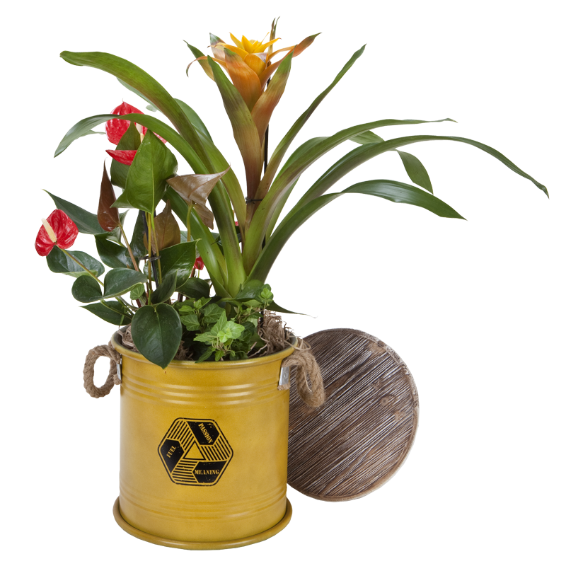 התמונה הראשית של קוקטיל צמחים גדול בחבית